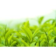 Zöldtea kivonat bio