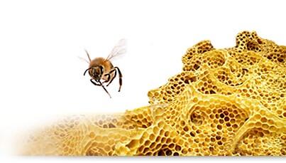 Méhviasz emulgeátor